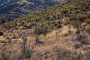 Sonoran Desert hillside in Catalina State Park in Arizona