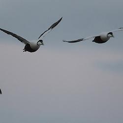 Birds/ Oiseaux