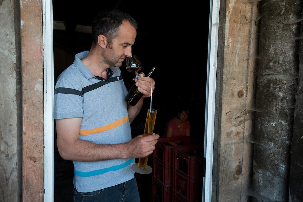 St&eacute;phane Grandval contr&ocirc;le le d&eacute;voppement et le niveau d'alcool de son calvados dans le cave de la ferme familliale. La famille Grandval est des producteurs cidricole depuis trois g&eacute;n&eacute;rations. Leurs Calvados, Pommeau et cidre sont fabriqu&eacute;s de fa&ccedil;on artisanale et traditionnelle. <br /> Cambremer, France. 18/07/2013.