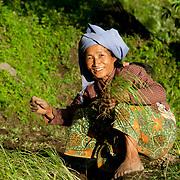 Nepal 2014. Pangma village. Tila planting millet.