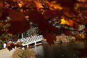 Footbridge seen through autumn foliage at the home of author and poet Carl Sandburg in Flat Rock, NC