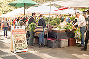 Groundworks Organic at Portland Farmers Market