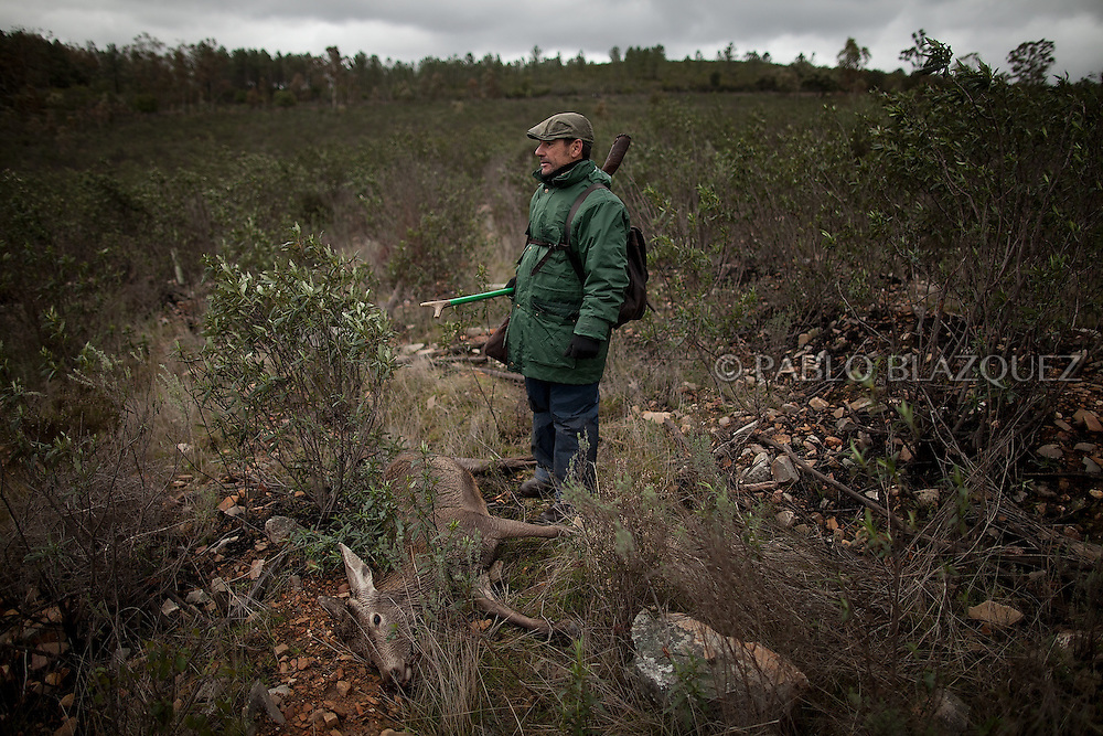 Pedro Bravo 48, checks the spot where he shot down a deer near Carbajo on January 19 2013, in Caceres Province, Extremadura, Spain. .Caceres has a well preserved natural environment. Plenty of its surface is dedicated to deers and wild boars hunting, making this, an important part of its economy. But most of the land belongs to large landowners. .In Carbajo, people gather three times a year to hunt deers and wild boars. In the past, they used to hunt for eating, but now days, they practice it as an sport and a social event. Then, they sell what the catch as wild game meat.