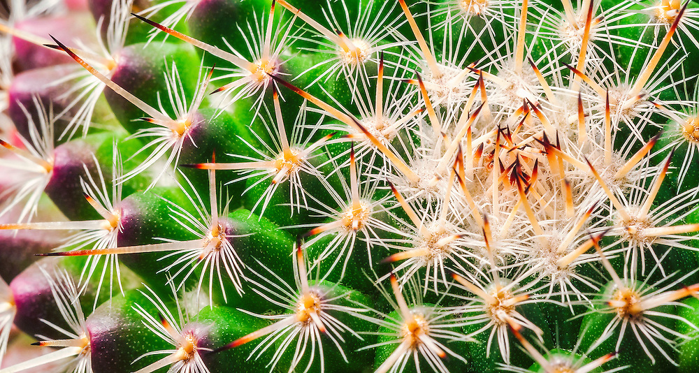 Close up of the top of a cactus plant.