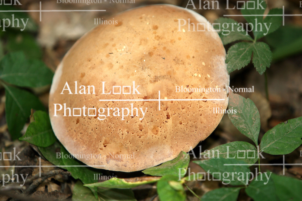 July 2007:  Mushroom,  Shot at the Trail of Tears State Park near Cape Girardeau, Missouri