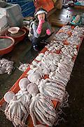 Jagalchi Fish Market. Octopus.