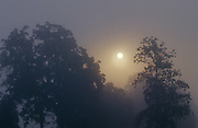 Foggy Sunrise - Smoky Mountains N.P
