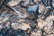 Tree bark, Mount Saint Helens National Volcanic Monument, Skamania County, Washington, USA