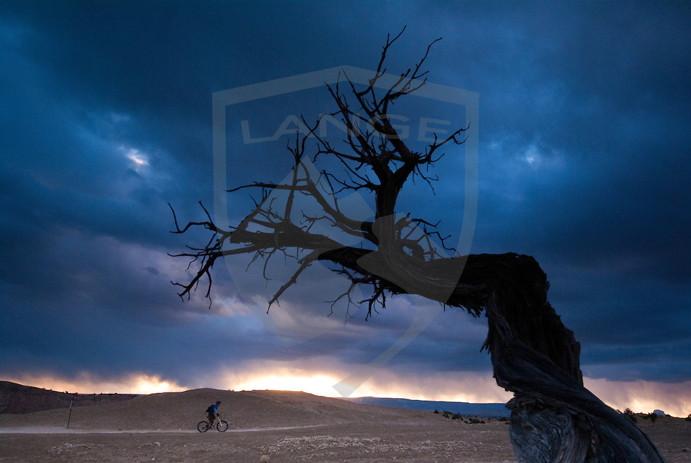 rider kevin lange makes his on the white mesa bike trails of new mexico framed by a weatherd juniper tree with vivid sunest light on the horizon.