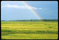 Rainbow hangs over ripe field of rice on Fazenda Retiro near Pelotas, Rio Grande do Sul. Brazil