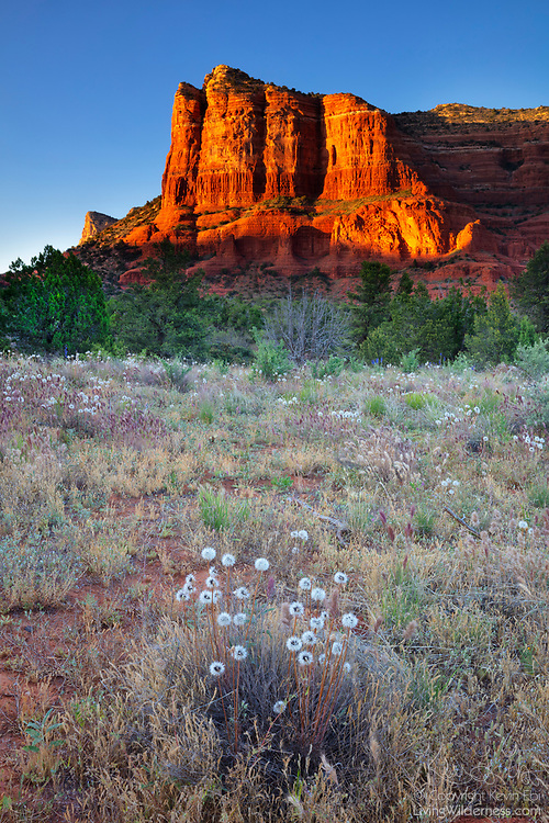 Courthouse Butte becomes intense red at sunset as it stands tall over a small meadow in the Coconino National Forest near Oak Creek, Arizona. Courthouse Butte stands 5,454 feet (1,662 meters) tall and is part of the Red Rock Country area of Sedona.