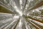 Redwoods & Oregon Coast