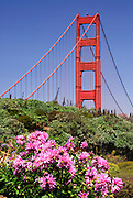 The view from Golden Gate Park showing the south tower of the Golden Gate Bridge with flowers in the foreground.