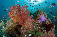 Healthy Coral head with Soft Corals, Anemones, etc