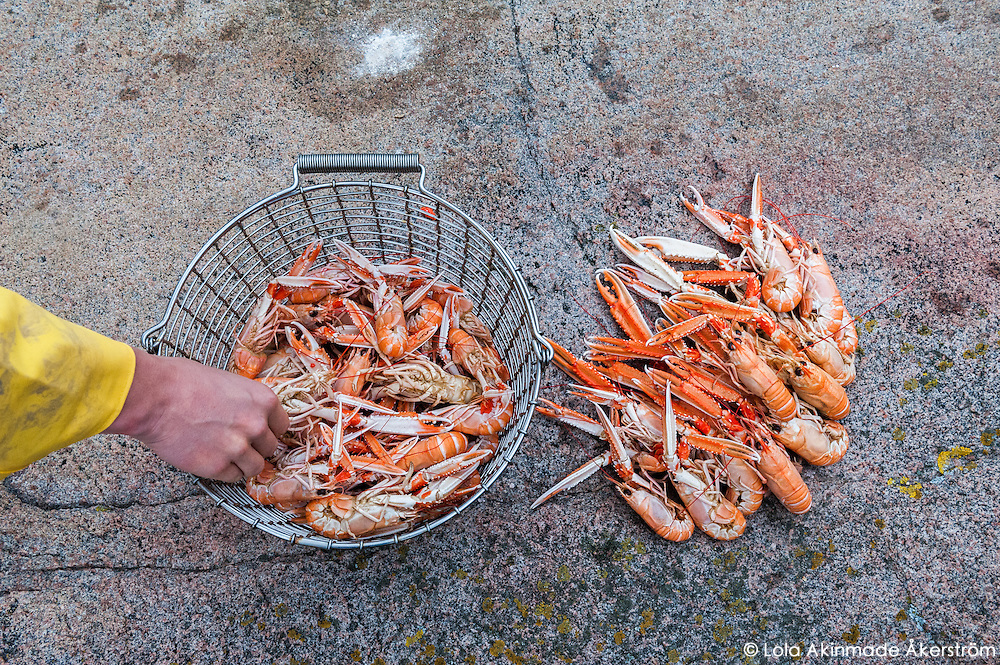Digging into freshly steamed langoustines during a pit stop.