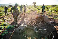 Members of an anti-poaching unit gather around the carcass of a poached white rhino. , Phinda private Game Reserve, KwaZulu Natal, South Africa