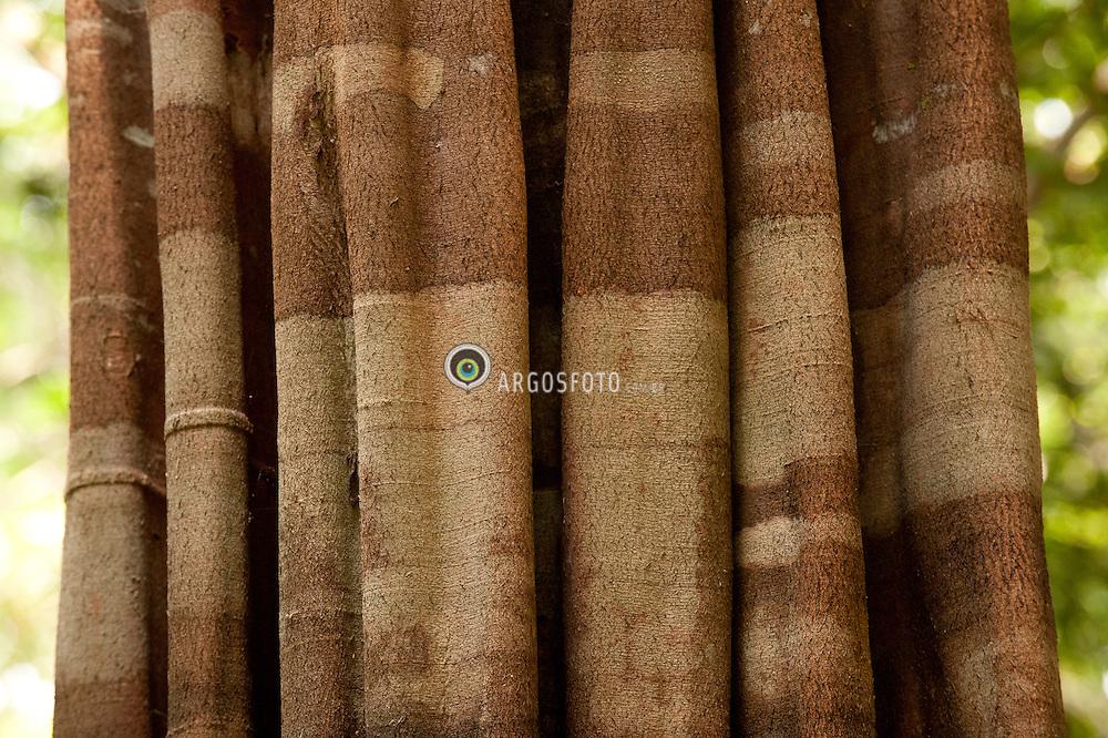 Floresta Nacional do Tapajos, uma Unidade de Conservacao, tipo Floresta Nacional./ The Tapajos National Forest is a conservation area, like the National Forest. Foto Ricardo Siqueira/Argosfoto