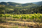 OWP vineyards sourced by Stoller