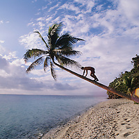 Fiji Islands, Yanuca Island, beach scene, tree climbing