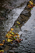 Fallen leaves in a puddle of rainwater, while some raindrops fall nearby, in Arashiyama, Kyoto.