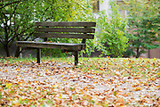 Leaves around a bench outside of Alden Library
