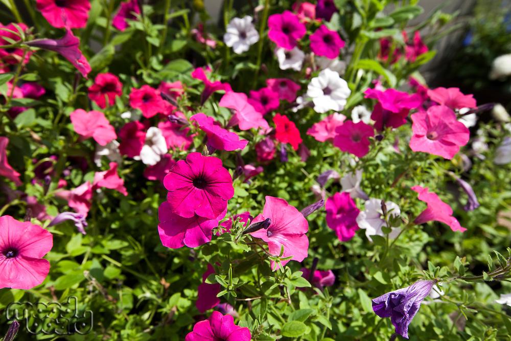 View of flowers blooming in park