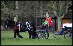 A festive pony and trap riding around the grounds of the Queen's Sandringham Estate as HM The Queen attends a church service on the Sandringham estate in Norfolk, United Kingdom. Sunday, 22nd December 2013. The Royal Family will spend Christmas at Sandringham. Picture by Andrew Parsons / i-Images