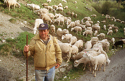 Shepherd with herd of sheep near Ardales; Andalucia,
