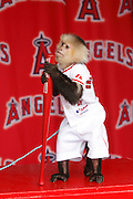 ANAHEIM, CA - APRIL 22:  The Los Angeles Angels of Anaheim rally monkey makes an appearance at FanFest before the game against the Baltimore Orioles on Sunday, April 22, 2012 at Angel Stadium in Anaheim, California. The Orioles won the game 3-2 in ten innings. (Photo by Paul Spinelli/MLB Photos via Getty Images)