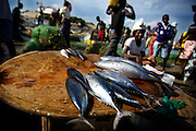 Fish is laid out for sale at the market in Elmina, about 130km west of Ghana's capital Accra on Thursday April 9, 2009. According to the United Nations Food and Agriculture Organisation, nearly a billion people worldwide depend on fish as their primary source of protein, and  120 million people depend on fishing for all or part of their income, with both kinds of dependence highest in the developing world.