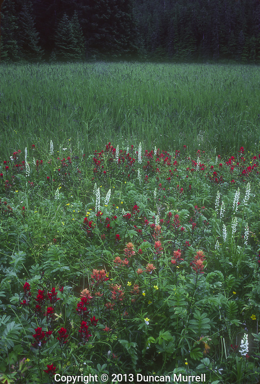 Flower meadow, Port Houghton inlet on the mainland, Southeast Alaska, USA.<br />