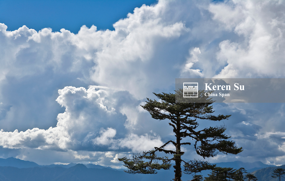 Hemlock forest under the blue sky and white clouds, Tang Valley, Bumthang, Bhutan