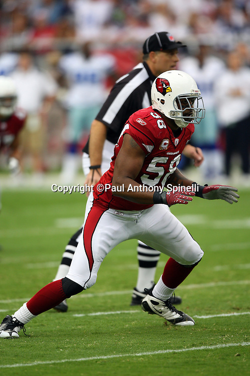 GLENDALE, AZ - OCTOBER 12: Linebacker Karlos Dansby #58 of the Arizona Cardinals makes a move during the game against the Dallas Cowboys at University of Phoenix Stadium on October 12, 2008 in Glendale, Arizona. The Cardinals defeated the Cowboys 30-24. ©Paul Anthony Spinelli *** Local Caption *** Karlos Dansby