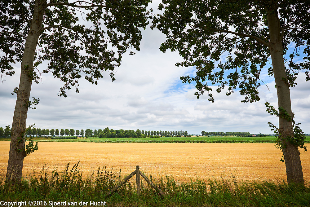 Weide landschap in Brabant - Meadow land in The Netherlands