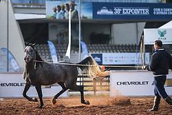 Cavalo Árabe durante a 38ª Expointer, que ocorre entre 29 de agosto e 06 de setembro de 2015 no Parque de Exposições Assis Brasil, em Esteio. FOTO: Jefferson Bernardes/ Agência Preview