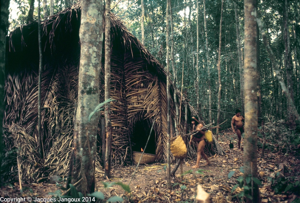 Communal thatch house covered with palm leaves of Indians in Guiana Highlands of Venezuela. Couple is returning from collecting and hunting in forest. Woman is carrying firewod, and a basket with a tumpline; man carries his blowgun.