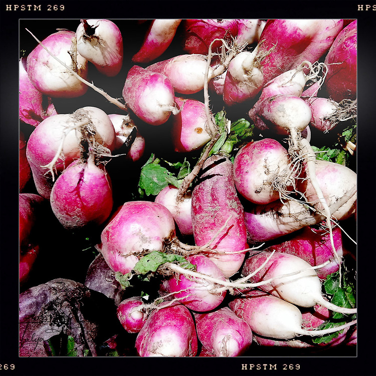 Radishes - Davenport, Iowa