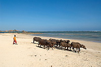 Indonesie. Lombok. Plage de Kuta au sud de l'île. // Indonesia. Lombok. Kuta beach at the south of the island.
