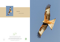 Red Kite Milvus milvus A5 Greeting Card with Peel and Seal White Envelope