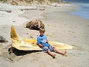 A boy sits on the decaying skull of a (likely) Antartic minke whale (Balaenoptera bonaerensis) found on the beach at Mason Bay, Stewart Island (Rakiura), New Zealand.