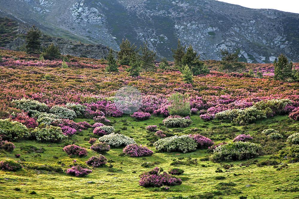 Laderas del Monte San Lorenzo. La Rioja ©Daniel Acevedo / PILAR REVILLA