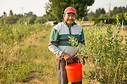 Anatolio Cruz, worker member of Our Table Cooperative, in Sherwood, Oregon.