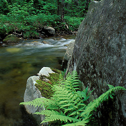 Lyman Brook.  The Nature Conservancy's Bunnell tract.  Northern Forest.  Columbia, NH