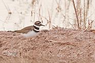 Smaller Wading Birds