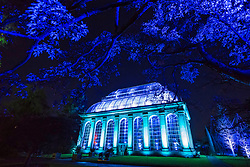 Edinburgh, Scotland, United Kingdom. 24 November, 2017. Edinburgh's newest festive event, Christmas at the Botanics, opened this evening . The illuminations held inside Edinburgh's Royal Botanic Gardens runs for 29 nights. The Glasshouse by Lightworks illuminated in spectacular colours.