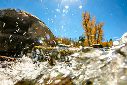 """""""Truckee River in Autumn 21"""" - Autumn photograph of the Truckee River and yellow cottonwood trees in Downtown Truckee, California."""