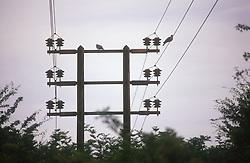 Electricity pylon,