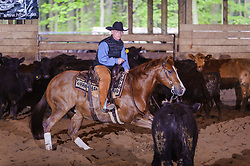 May 21, 2017 - Minshall Farm Cutting 4, held at Minshall Farms, Hillsburgh Ontario. The event was put on by the Ontario Cutting Horse Association. Riding in the Open Class is Brian Kelly on The Reyl Slim Shady owned by Eric Bouchard.