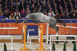 344 - Glen<br /> KWPN Stallion Selection - 's Hertogenbosch 2014<br /> © Dirk Caremans