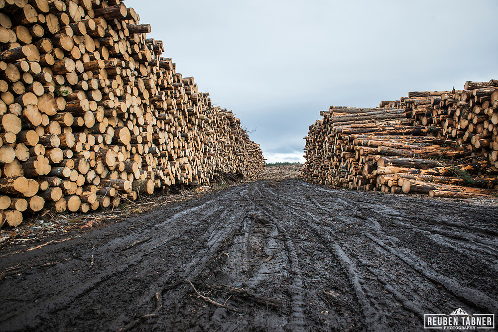 Large timber stacks sit at the road side ready for hauling, following forestry operations near Inverness in Scotland.